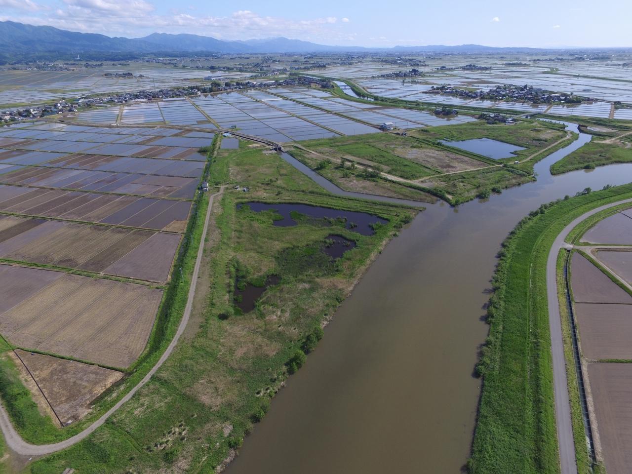 福島潟流域治水対策河川事業(大規模)築堤 工事